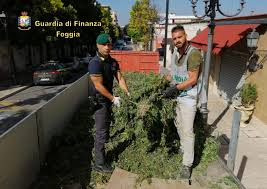Marchiodoc - Sequestro Marijuana