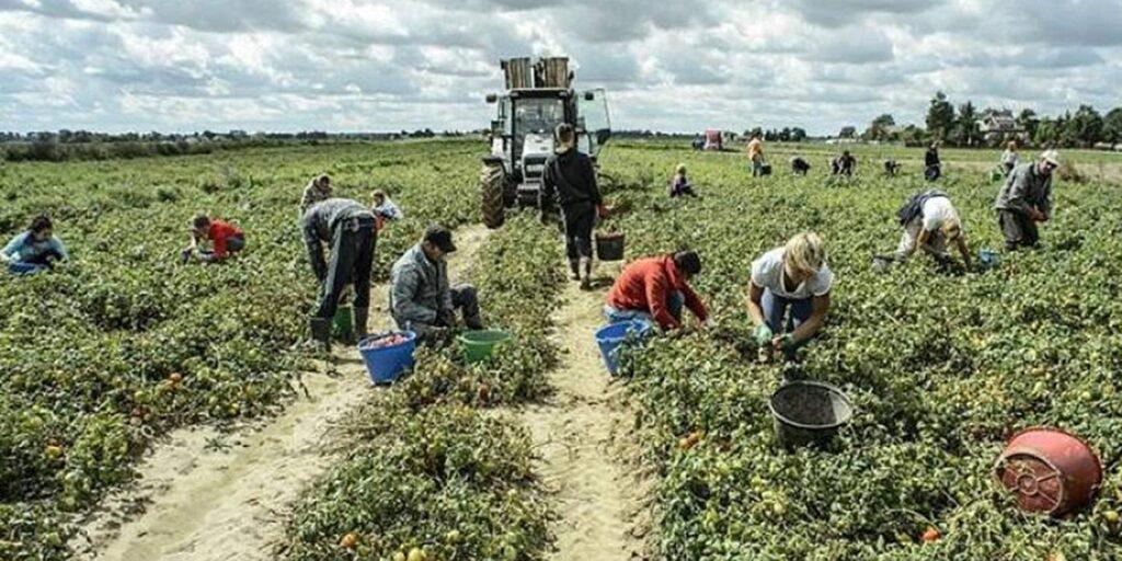 Marchiodoc - Braccianti agricoli False assunzioni e truppa all'INPS: 21 misure cautelari