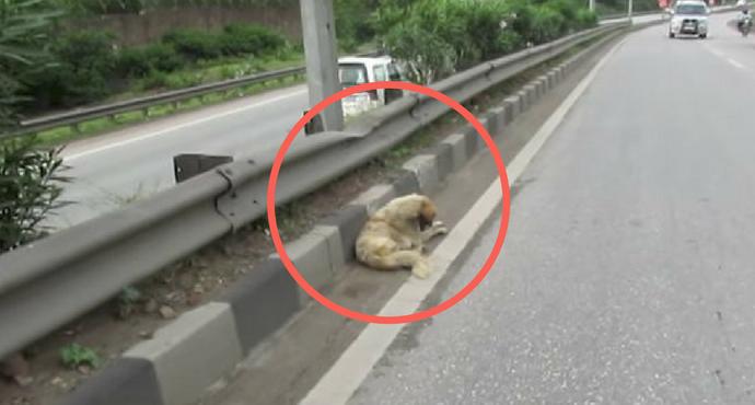 Cucciolo di cane vaga in autostrada: salvato dalla polizia