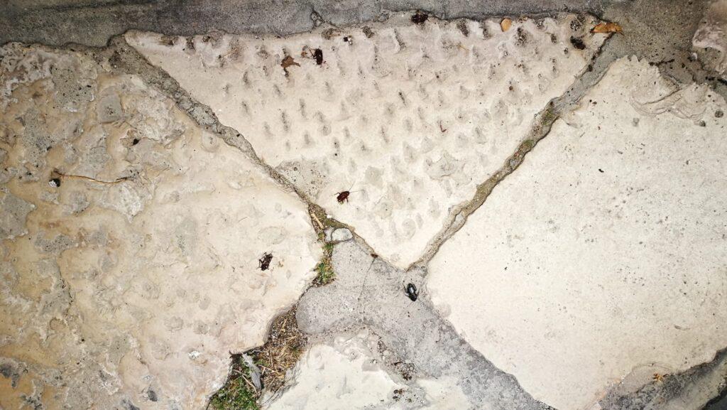 """Cerignola, invasione di scarafaggi in centro, i residenti: """"Subito disinfestazione"""""""
