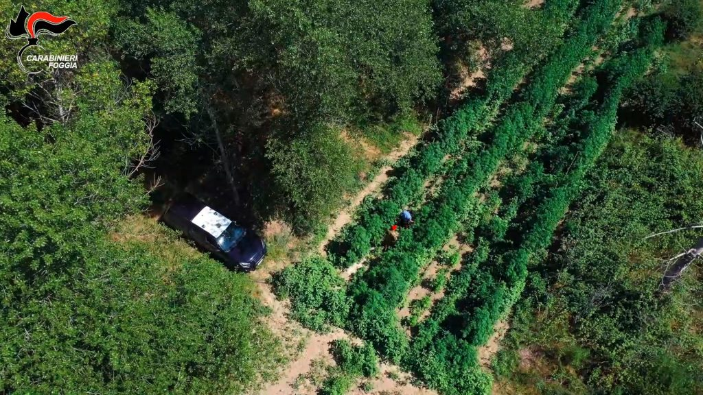 """Operazione """"Green Power"""": fiumi milionari di droga, 15 arresti tra Alto e Basso Tavoliere   VIDEO"""